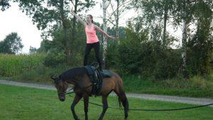 Chayenne ist seit zwei Monaten bei uns und wird gerade als Voltipferd ausgebildet. Sie lernt super schnell und der Umgang mit ihr macht riesigen Spaß.